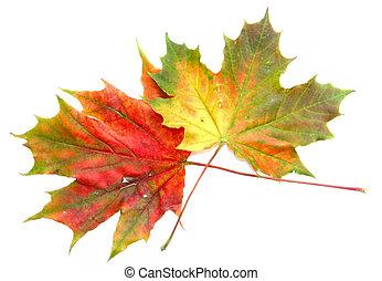 automne, couleurs, #9