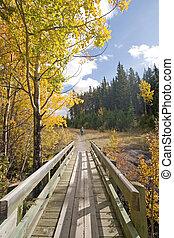 automne, couleurs, automne