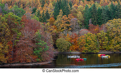 automne, couleurs, faskally, loch