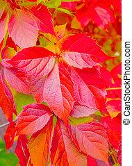 automne, couleurs, fond