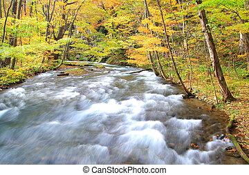automne, couleurs, oirase, ruisseau