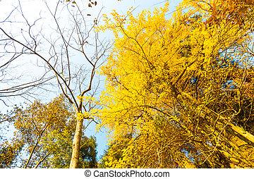 automne, couleurs, porcelaine