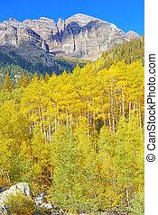 automne, couleurs, tremble, arbres