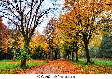 automne, couloir, coloré