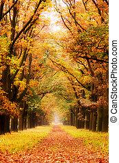 automne, couloir