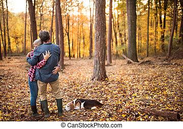 automne, couple, promenade chien, forest., personne agee