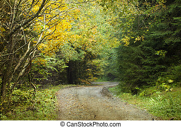 automne, courber, forêt, route