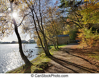 automne, day., tarn, arbres, talkin