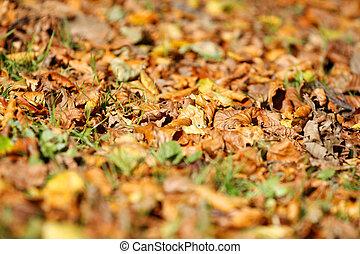 automne, doré, feuilles, fond, brun