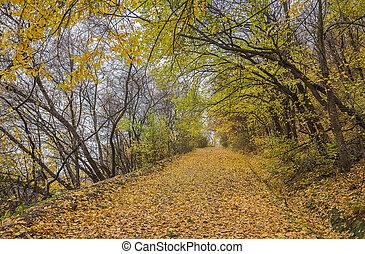 automne, doré, feuilles, parc, route