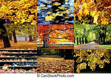 automne, doré, images