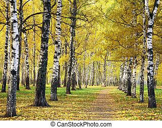 automne, doré, parc, chemin
