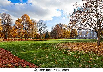 automne, doré, park., ville