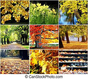 automne, doré