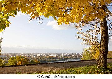 automne, doré, ville parc