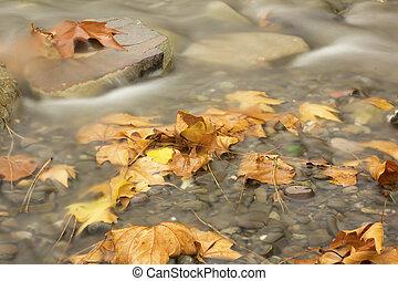 automne, eau, feuilles