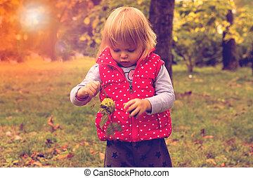 automne, enfantqui commence à marcher, parc, jour