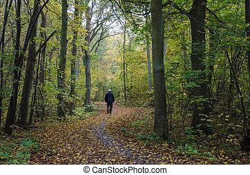 automne, enroulement, marche, homme, sentier
