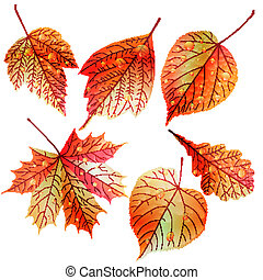 automne, ensemble, leaves., coloré