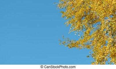 automne, ensoleillé, feuille, jour, automne