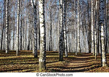 automne, ensoleillé, forêt, chemin