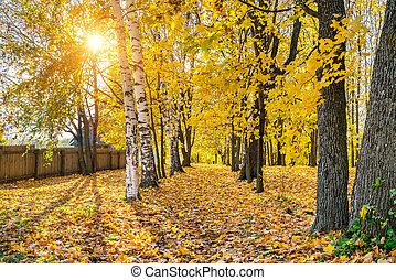 automne, ensoleillé, parc