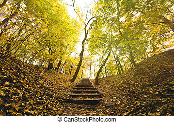 automne, escalier, parc