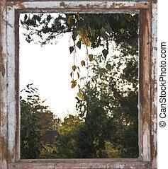 automne, fenêtre, arbre, vue