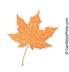 automne, feuille érable, illustration., créatif, eau, drops., vecteur, conception, foliage., orange, element.