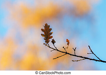 automne, feuille chêne