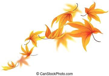 automne, feuilles chute, érable