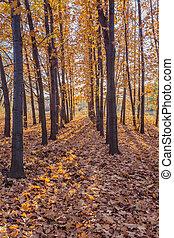 automne, feuilles, Parc, automnal, Arbres