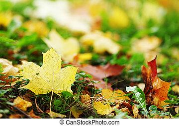 automne, fin, feuilles, haut
