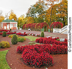 automne, fleurs, parc