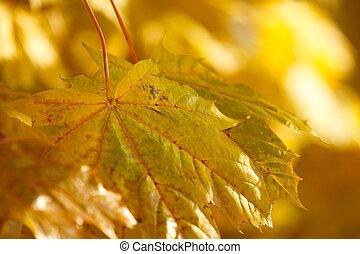 automne, fond, à, très, foyer peu profond