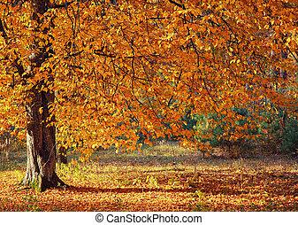 automne, forêt arbre
