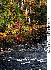 automne, forêt, et, rivage lac