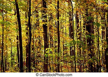 automne, forêt, paysage