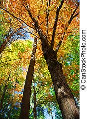 automne, forêt
