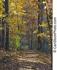 automne, forêt, promenade