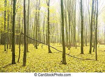 automne, forest.