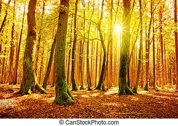automne, forest., lumière soleil