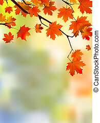 automne, foyer., peu profond, feuilles rouge