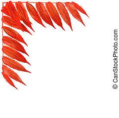 automne, frontière, carte voeux