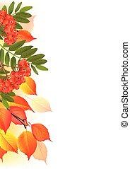 automne, frontière, feuilles, rowan
