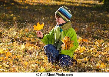 automne, garçon, feuilles, parc, séance