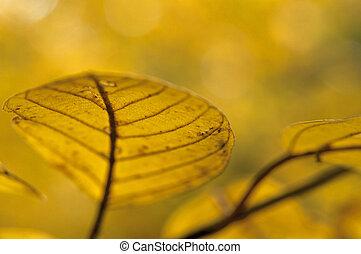 automne, gros plan, feuille