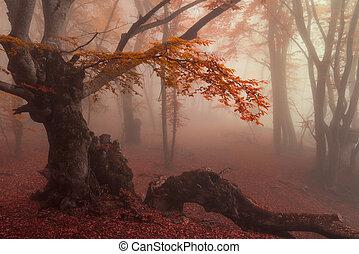 automne, hêtre, forêt