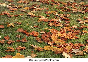automne, herbe, feuille, moquette