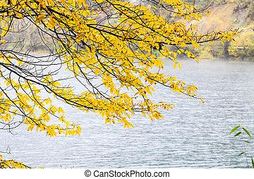automne, hiver arbre, vs.